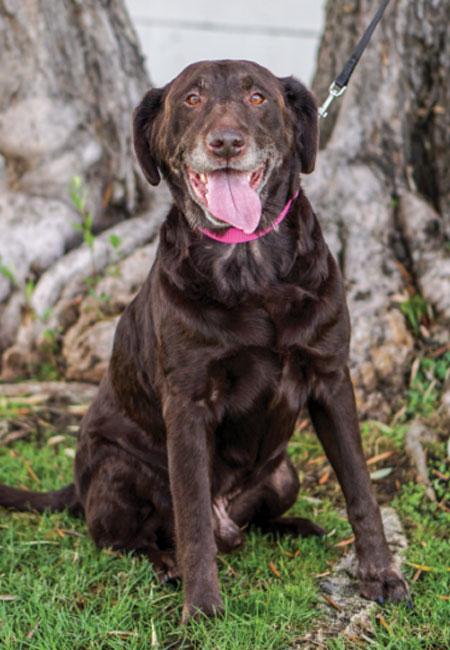 Last_Chance_At_Life_dog_adopt_Henry-2