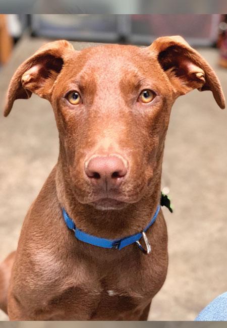 Last_Chance_At_Life_dog_adopt_Rav