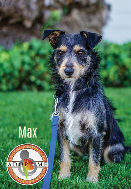 Last_Chance_At_Life_dog_adopt_Max