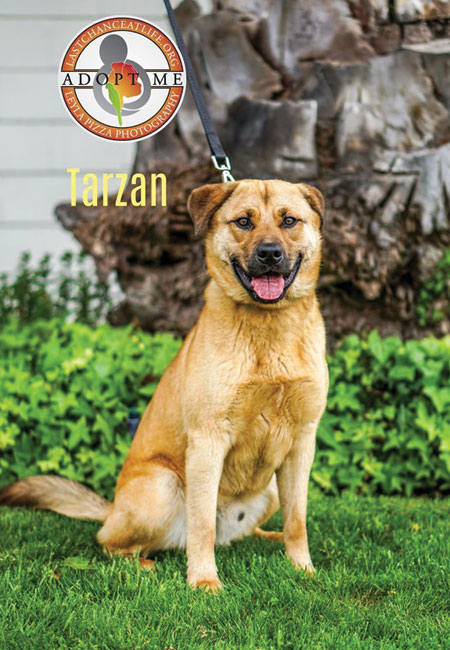 Last_Chance_At_Life_dog_adopt_Tarzan
